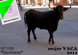 Mejor VACA 2011 (1)