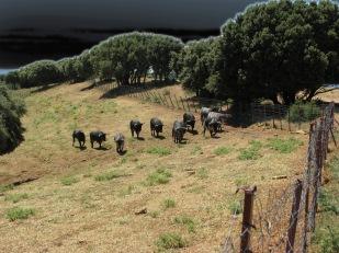 Visita ganadería Los Maños (10)