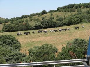 Visita ganadería Los Maños (12)