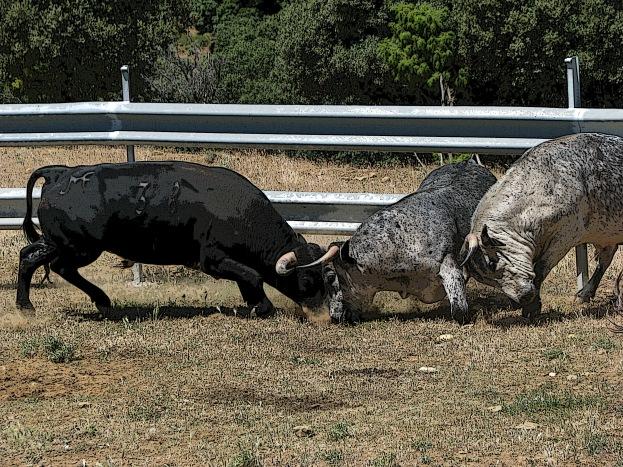 Visita ganadería Los Maños (14)