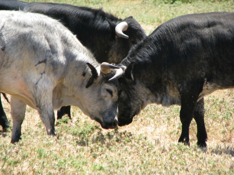 Visita ganadería Los Maños (15)