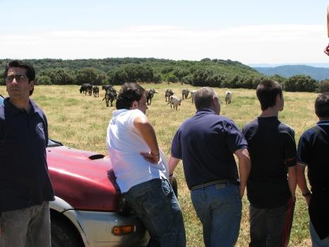 Visita ganadería Los Maños (16)