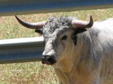 Visita ganadería Los Maños (25)