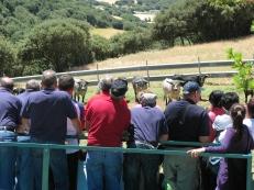 Visita ganadería Los Maños (26)