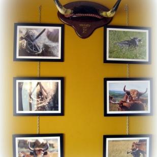 Exposición Alberto Barrios 5