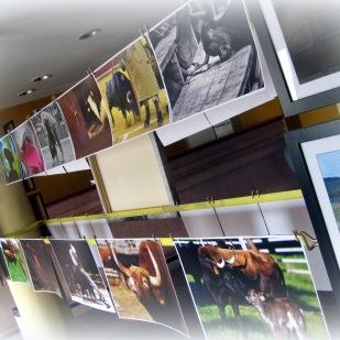 Exposición Alberto Barrios 6