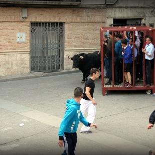 Jornada Taurina Campoltoro 2014 -34-