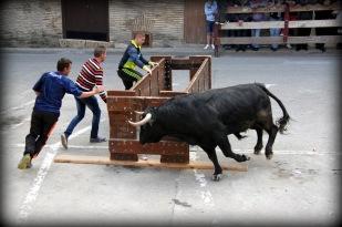 Jornada Taurina Campoltoro 2014 -35-