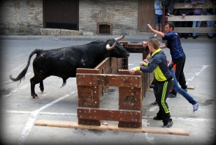 Jornada Taurina Campoltoro 2014 -36-